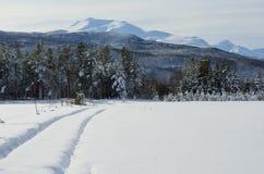 斯诺伊在森林公路的领域和汽车轨道有阳光和山背景的 库存照片