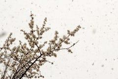 斯诺伊天气在4月 库存图片