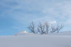 斯诺伊小山和树 免版税图库摄影