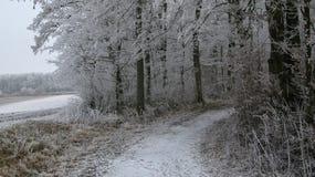 斯诺伊小径/带领入有冰和积雪的树的一个森林的农场马路 免版税库存图片