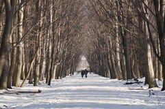 斯诺伊方式 城市居民在Dendrarium停放,弗拉索季卡夫卡兹茨,北部奥塞Alania,俄罗斯 2014-01-07 免版税库存图片