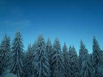 斯诺伊早晨在森林里 免版税库存照片