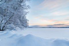 斯诺伊树、随风飘飞的雪和湖在芬兰 库存图片