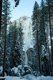 斯诺伊树上部更低的优胜美地瀑布 免版税库存图片