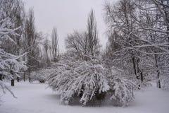 斯诺伊树和灌木在城市公园 33c 1月横向俄国温度ural冬天 免版税图库摄影