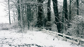斯诺伊树和篱芭 免版税图库摄影