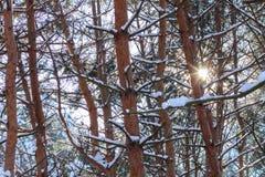 斯诺伊树在室外的冬天 免版税库存图片