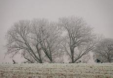 斯诺伊树在新年 免版税库存照片