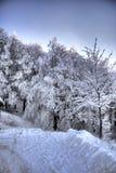 斯诺伊树木丛生的山腰 免版税图库摄影