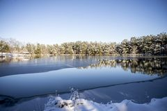 斯诺伊树照片在一个冻池塘的 库存图片