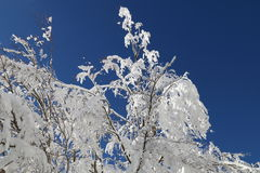斯诺伊树3 免版税库存照片