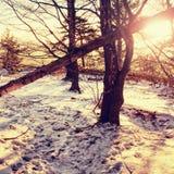 斯诺伊森林公路在早期的冬天森林晴天 新鲜的粉末雪 库存照片