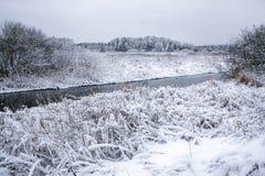 斯诺伊森林在一个冬日 库存照片