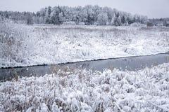 斯诺伊森林在一个冬日 免版税图库摄影