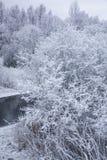 斯诺伊森林在一个冬日 免版税库存图片