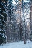 斯诺伊森林在冷的西伯利亚 免版税库存照片