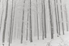 斯诺伊森林,在孚日省的冬天,法国 免版税库存照片