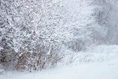 斯诺伊森林 免版税库存图片