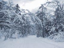 斯诺伊森林 免版税图库摄影