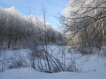 斯诺伊池塘在冬时的森林里 库存照片