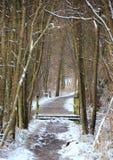 斯诺伊泥泞的森林道路在冷的冬天 免版税库存图片