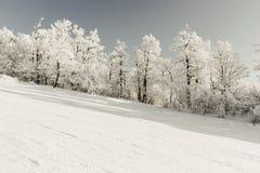 斯诺伊滑雪的冬天倾斜或雪板运动,与树沿路,有蓝色清楚的天空的,冬季体育休闲, 库存图片