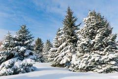 斯诺伊结构树 库存照片