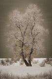 斯诺伊结构树 免版税库存照片
