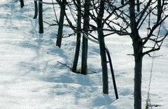 斯诺伊苹果果树在果树园 库存图片