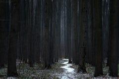 斯诺伊菩提树遮荫胡同在早期的春天 免版税库存照片