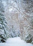 斯诺伊运输路线在冬天森林里 库存照片