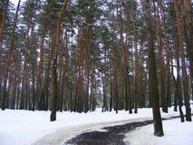 斯诺伊道路刻痕森林在白俄罗斯 免版税库存图片