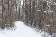 斯诺伊道路在森林寒冷和斯诺伊冬天在立陶宛,欧洲 免版税库存照片
