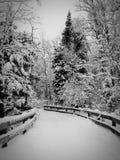 斯诺伊道路在森林里 免版税库存图片