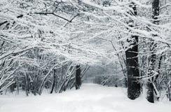 斯诺伊道路在森林 库存图片