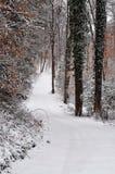 斯诺伊道路穿过森林以垂直格式 图库摄影