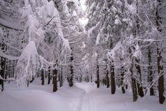 斯诺伊道路穿过森林 免版税库存图片