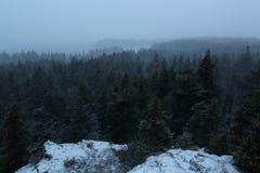 斯诺伊风暴在北部森林 库存照片