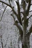 斯诺伊,计算树的树干反对多雪的分支 免版税库存图片