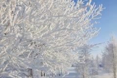 斯诺伊结构树在公园 森林本质星期日冬天 免版税库存图片