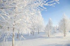 斯诺伊结构树在公园 森林本质星期日冬天 免版税图库摄影