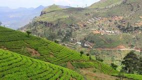 斯里兰卡在nuwara eliya的茶园山 股票录像