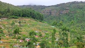 斯里兰卡在nuwara eliya的茶园山 股票视频
