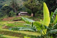 斯里兰卡的山森林风景看法  免版税图库摄影