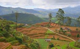 斯里兰卡的山的一个小村庄 库存照片