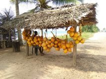 斯里兰卡的甜国王椰子批发商 库存照片