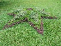 斯里兰卡的自然庭院 免版税库存照片