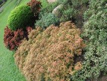 斯里兰卡的自然庭院 库存图片