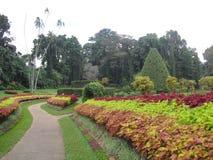 斯里兰卡的自然树 免版税库存照片