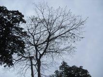 斯里兰卡的自然树 图库摄影